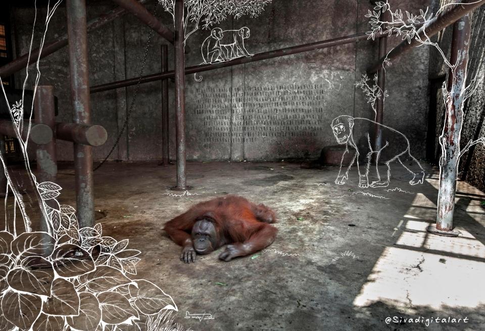 Corona Isolation Sivadigitalart 1x1 chimpanzee 2